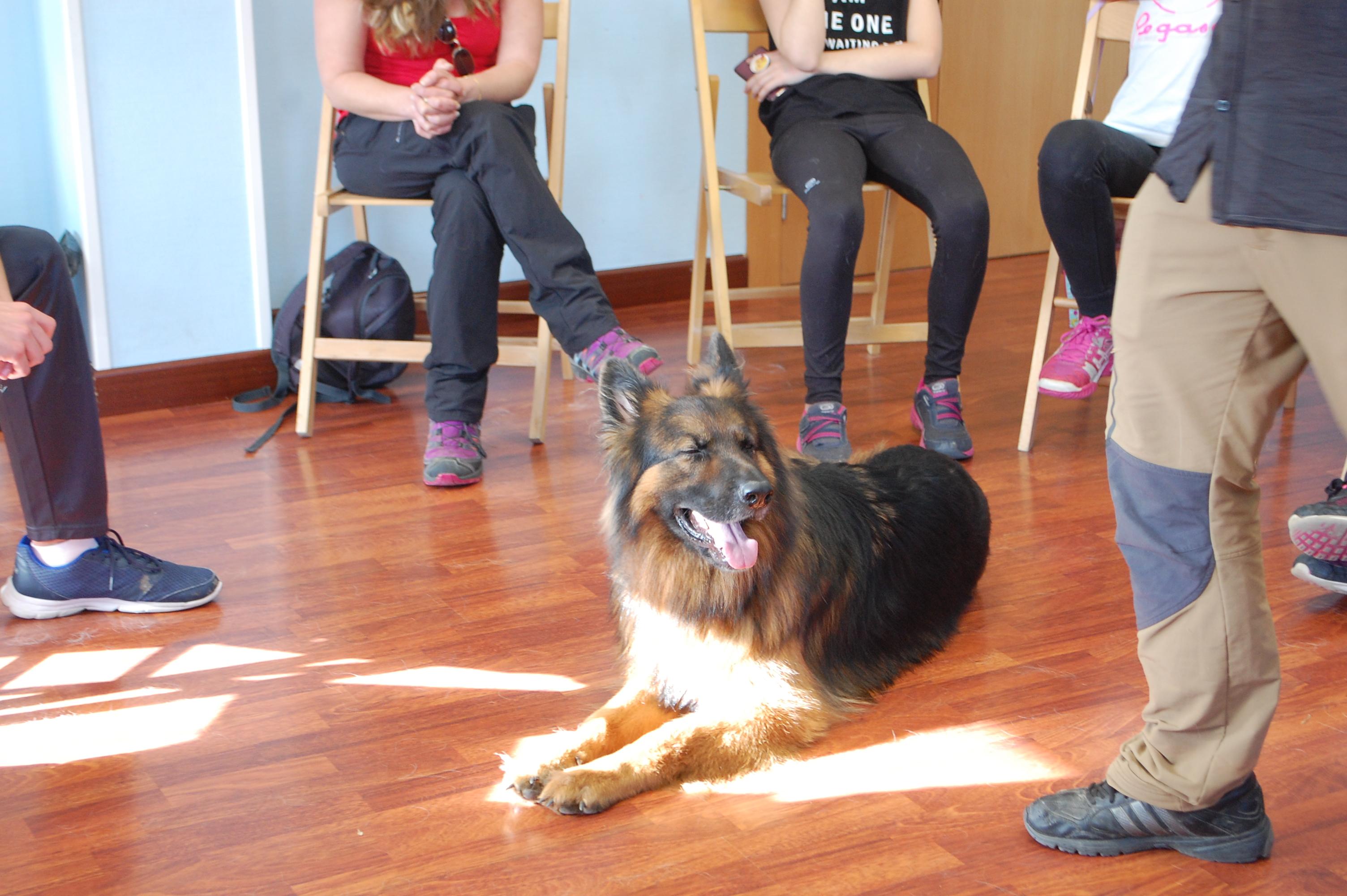 Albadekan.  educando a los perros .